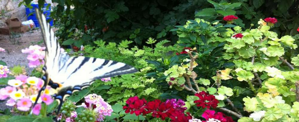 Dance of butterflies and flowers in Veziroglu Pension..